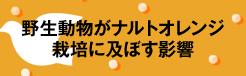 野生動物がナルトオレンジ栽培に及ぼす影響