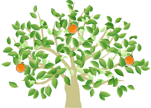 ナルトオレンジの歴史
