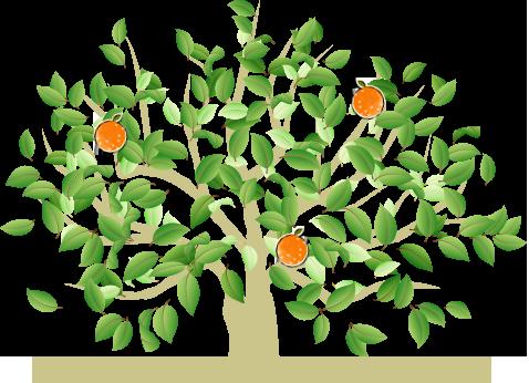 ナルトオレンジの生産状況
