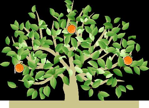 ナルトオレンジのレシピ集